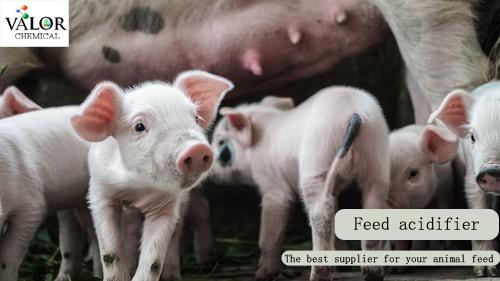 Feed acidifier for animal feed