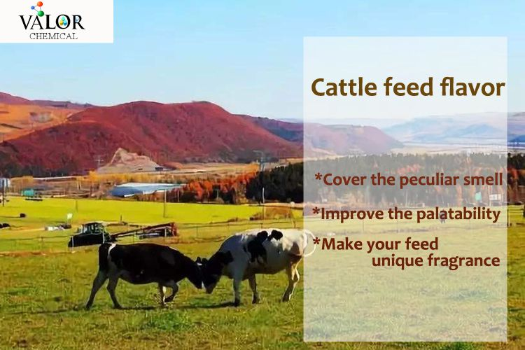 Cattle feed flavor