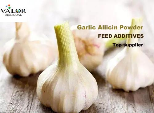 garlic allicin powder feed additives